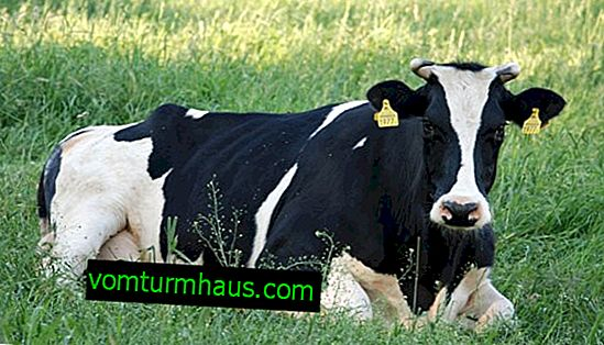 How to Remove Worms in Cattle