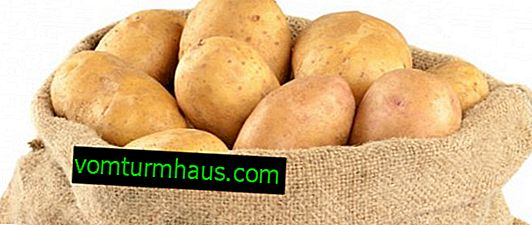 Potato Natasha: characteristics and description of the variety