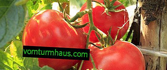 Tomate Katyusha F1: descrição da variedade