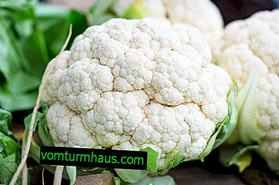 Diseases and pests of cauliflower and methods of dealing with them