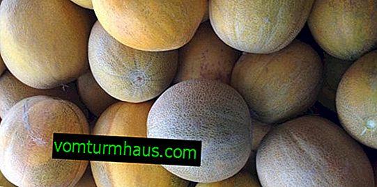 Skladovanie melónu v chladničke: metódy a užitočné odporúčania