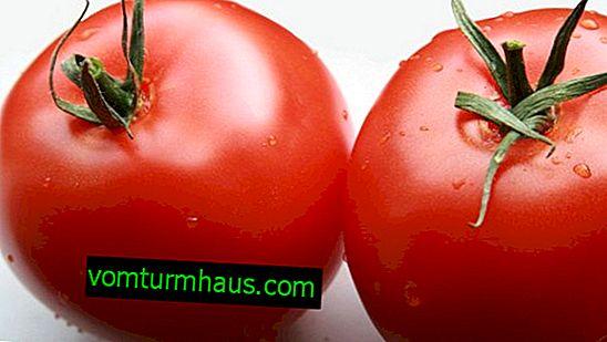 Rajčica Nadežda F1: opis, poljoprivredni uzgoj