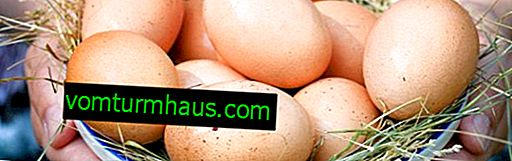 Ali lahko piščanci odlagajo jajca brez petelinov?