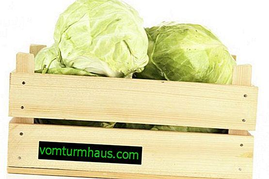 Як вибрати кращий сорт капусти для зберігання на зиму