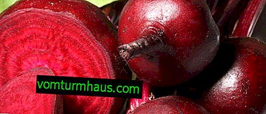 Rote Beete Boyarynya: Eigenschaften der Pflanze, Anbau und Pflege zu Hause