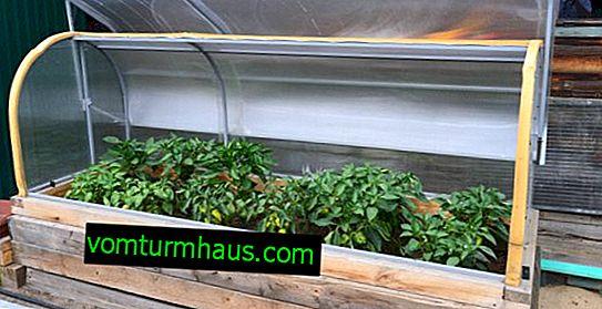 Hemgjord mini-växthus för plantor: typer, DIY-tillverkning