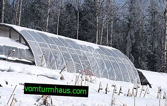 Advantages and disadvantages of winter planting in a greenhouse