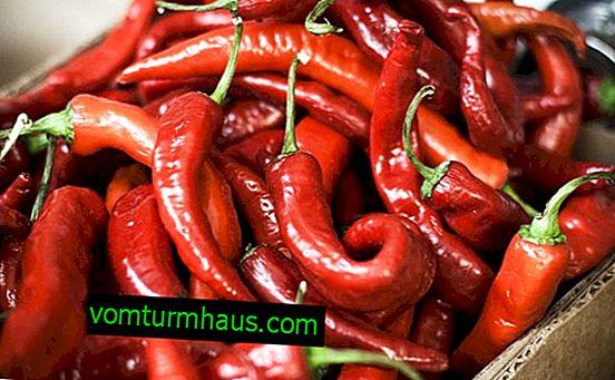 Röd paprika: fördelar och skador, kalorier och funktioner