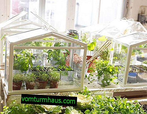Making a home greenhouse in an apartment with your own hands