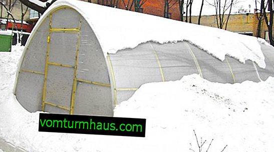 ¿Cómo preparar un invernadero para el invierno?