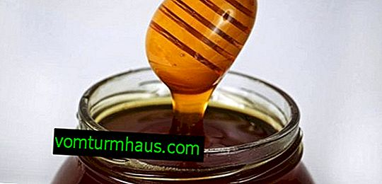 Taiga honey: description, useful properties and harm
