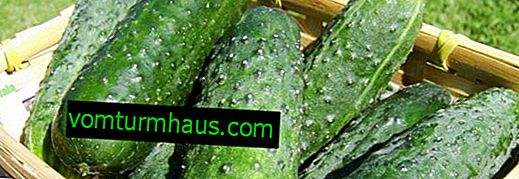 How to pinch cucumbers