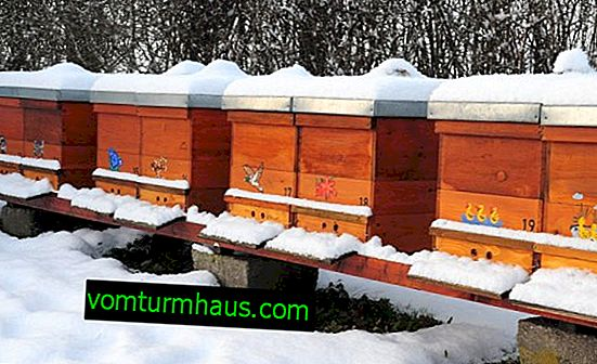 How to warm the hive for the winter?