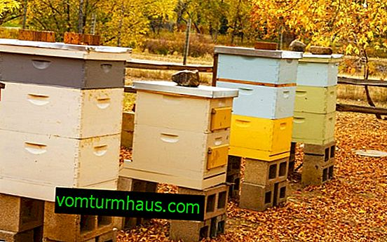 Polyurethane foam hives: features how to do it yourself