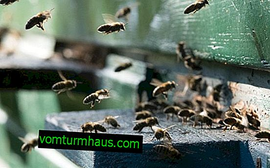 Bee droppings: medicinal properties where used