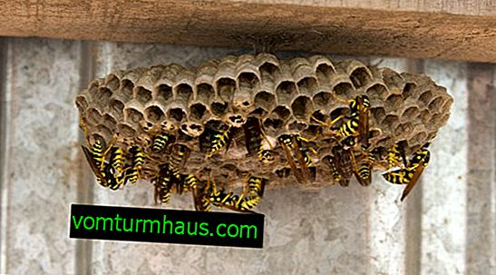 Folk and chemical agents for wasp control