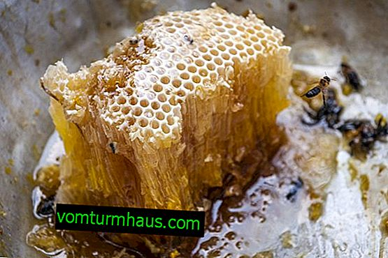 Wild bee honey: characteristics, benefits and harms of consumption