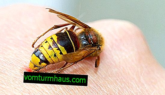 First aid for a wasp sting at home