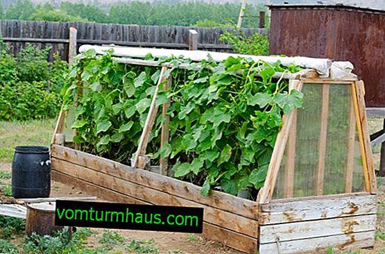 Hvordan laver man et drivhus til agurker med egne hænder?