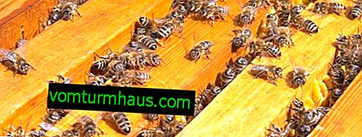Comment se comportent les abeilles en novembre