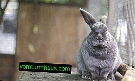 Jak postavit a vybavit dům pro králíka vlastními rukama doma