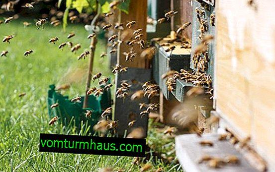 Qu'est-ce qu'un rucher d'abeille?