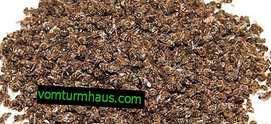 Anvendelse af tinktur af bipestilens
