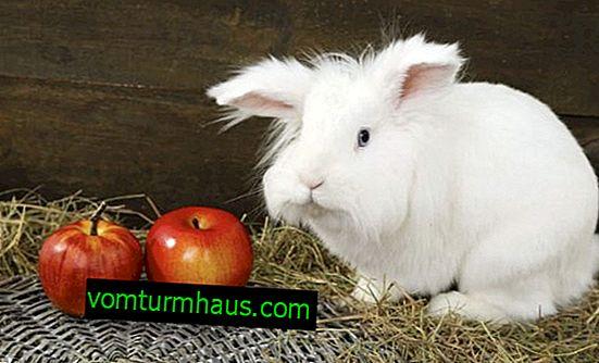 Kako držati ukrasne zečeve u stanu