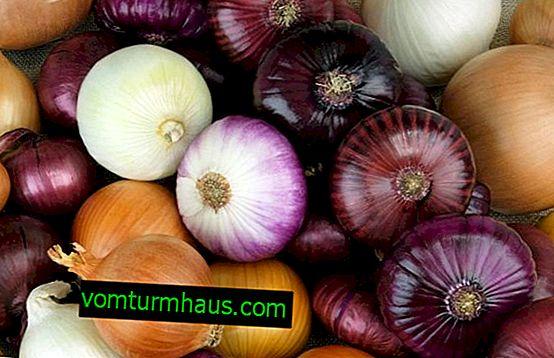 Calories d'oignons crus par 100 grammes de produit