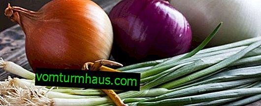 Vitamin sammensætning af løg og dets fordelagtige egenskaber