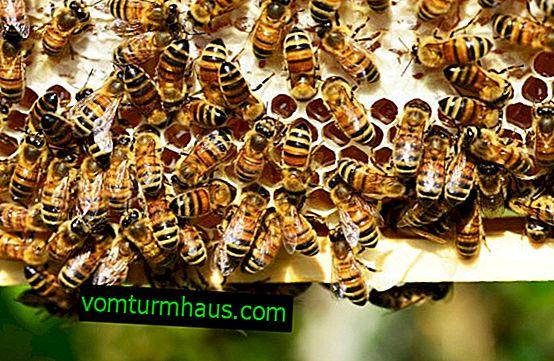 Kako se znebiti sosedov ali divjih čebel?
