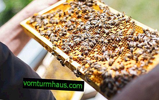 Tecnologías innovadoras en la apicultura moderna.