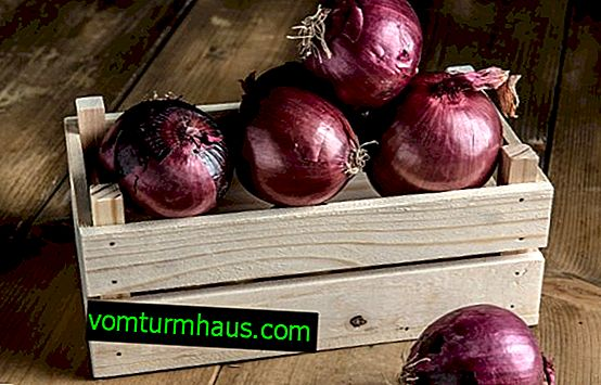 Purple onion: the benefits and harms, unlike the usual