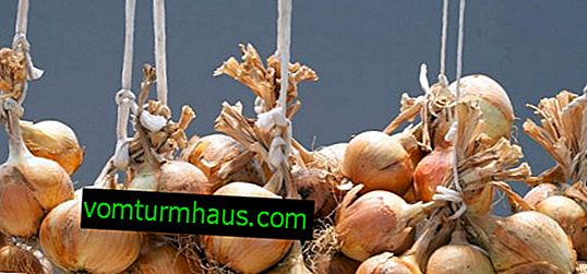 วิธีการสานหัวหอมในสายถักเพื่อเก็บและอบแห้ง