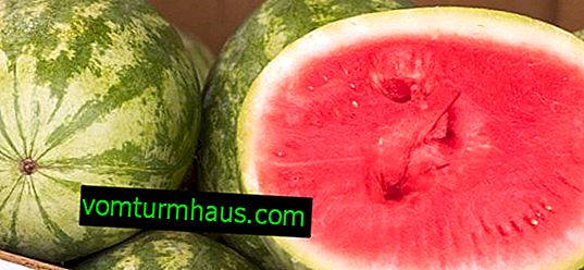 How to keep a watermelon until the New Year at home