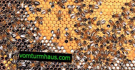 Caractéristiques de la formation du nid d'abeilles pour l'hiver
