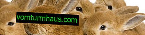 โรคจมูกอักเสบในกระต่าย: สาเหตุอาการและการรักษา