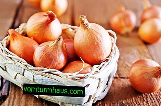 Zimní cibule Senshui: popis, metody pěstování a péče