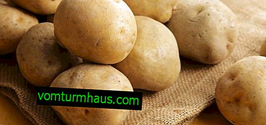 Krompir Lilya: karakteristike i karakteristike uzgoja sorti