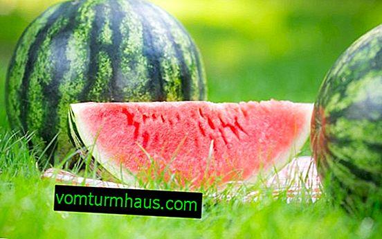 Wassermelone: Beschreibung, Nutzen und Schaden für die Gesundheit, chemische Zusammensetzung, Verzehrmethoden und Kaloriengehalt
