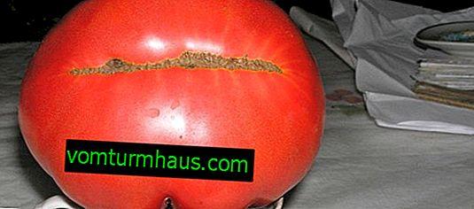Rajčica ruska veličina F1: opis sorte, značajke uzgoja i njege