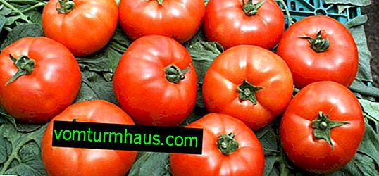 Tomatoes Red arrow F1: characteristic, features of cultivation
