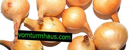Cibule Sturon: pěstování, péče a pěstování odrůd
