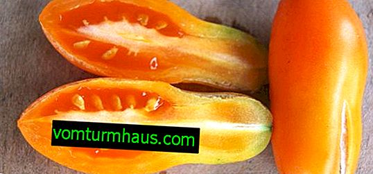 Pieprznik jadalny: opis i plon odmiany, cechy uprawy i pielęgnacji