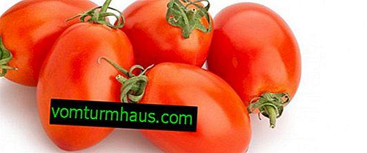 Rajčata Maroussia: popis, zemědělské pěstování