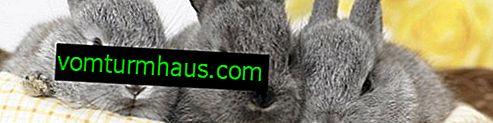Mieszanka paszowa dla królików: skład, samodzielne gotowanie, zwłaszcza karmienie