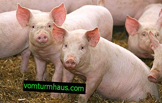 Forblandinger til svin: sammensætning og egenskaber
