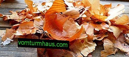 Nützliche Eigenschaften und Merkmale der Anwendung von Zwiebelschalen-Abkochung