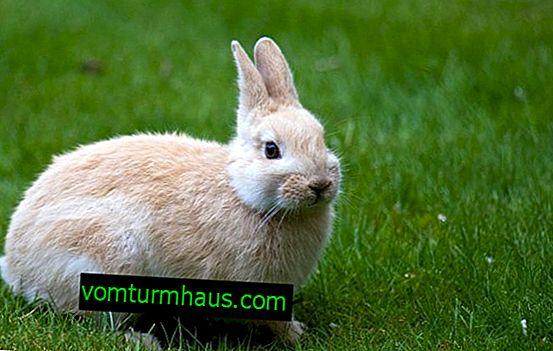 Чим поїти кроликів взимку в домашніх умовах