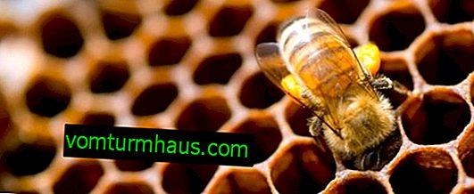 Hvordan fremstiller bier voks?
